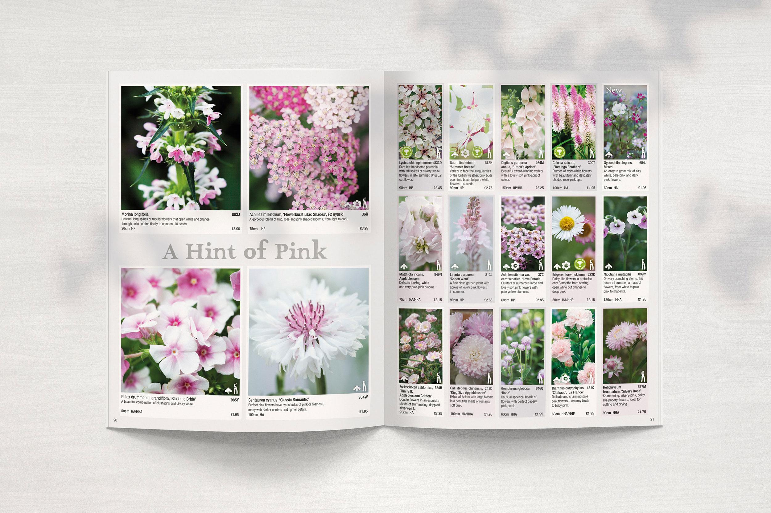 Pink Flower Spread Print Design