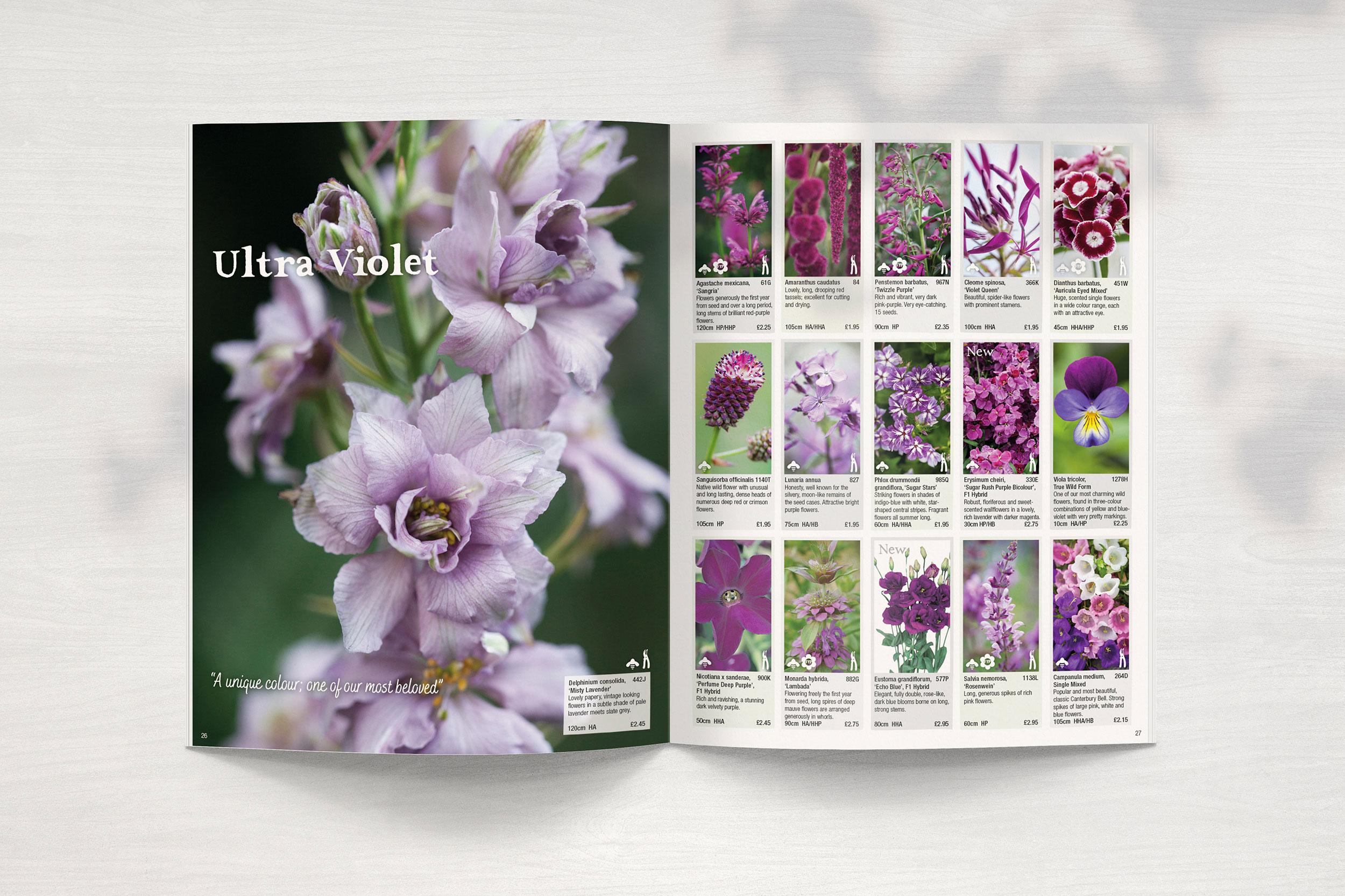 Purple Flower Seeds